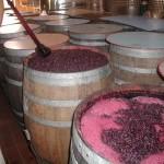 Lavorazione del vino